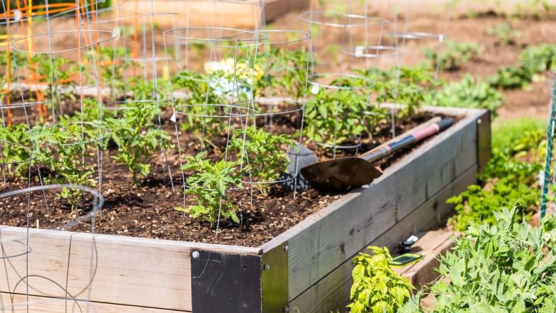 healthy-siouxland-community-garden