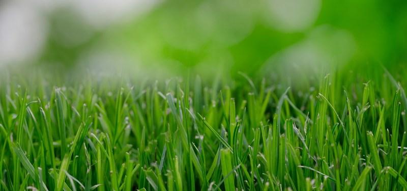 nature-garden-grass-lawn-e1461361892228