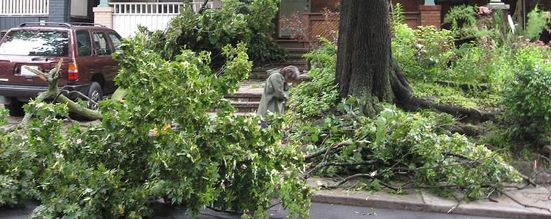 storm_damage_tree_(2)