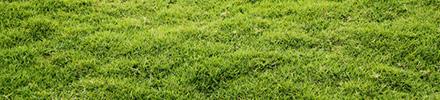 lawn_line